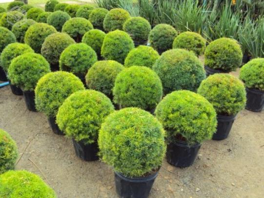 gramas e gramados