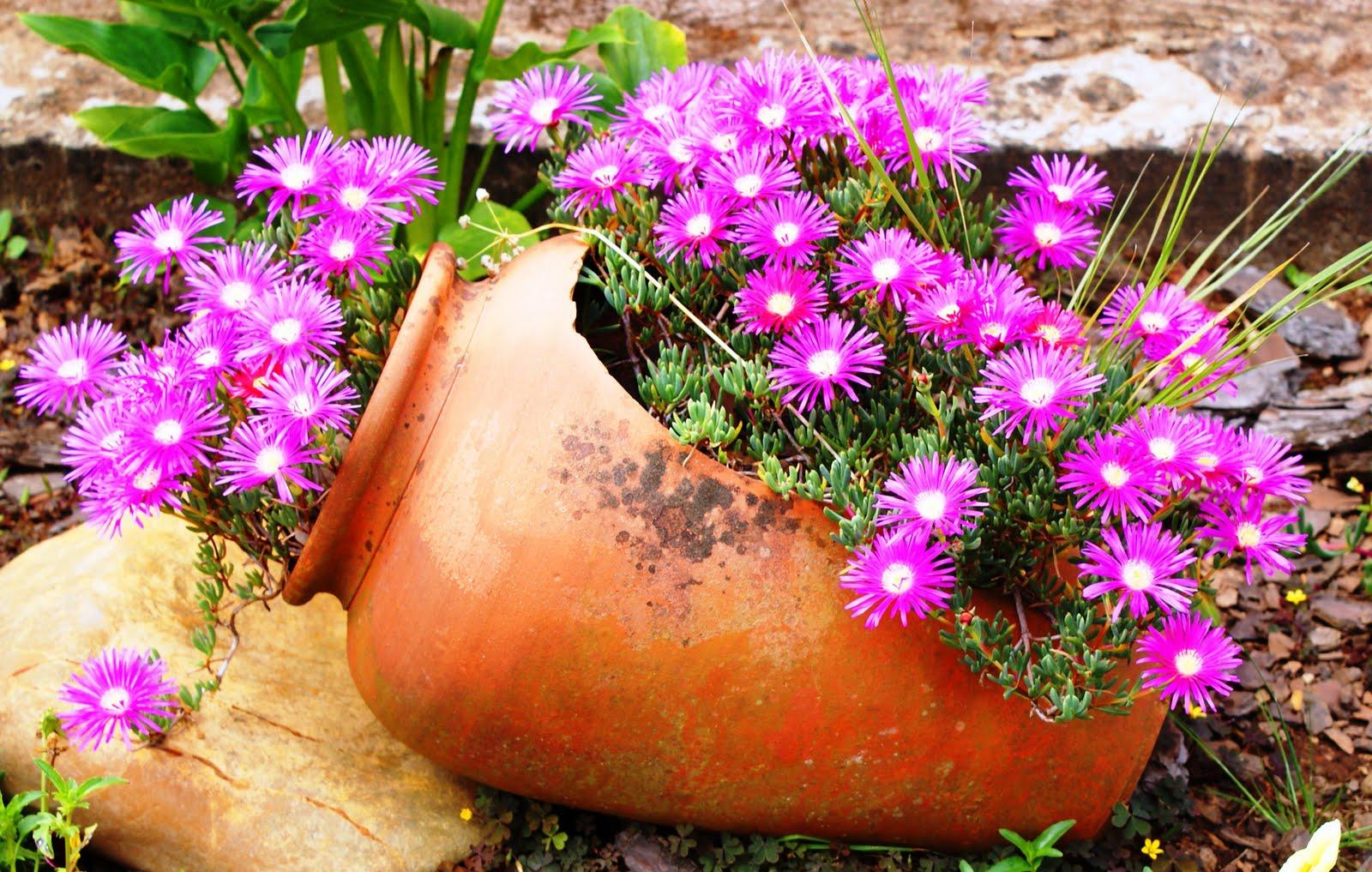 Dicas para cuidar do seu jardim