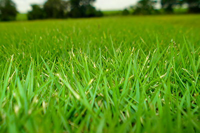 Mantenha seu gramado sempre verde